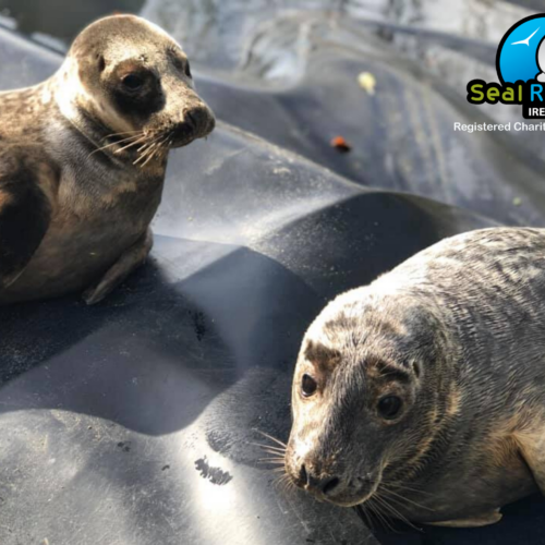 What's happening at Seal Rescue?