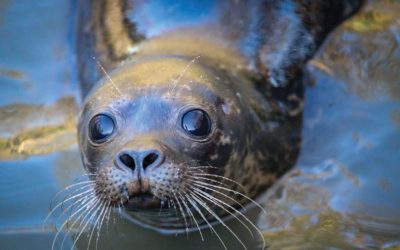 Seal Rescue Ireland and Salesforce Partner to Plant 20,000 Trees