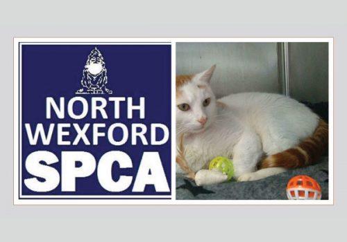 North Wexford SPCA